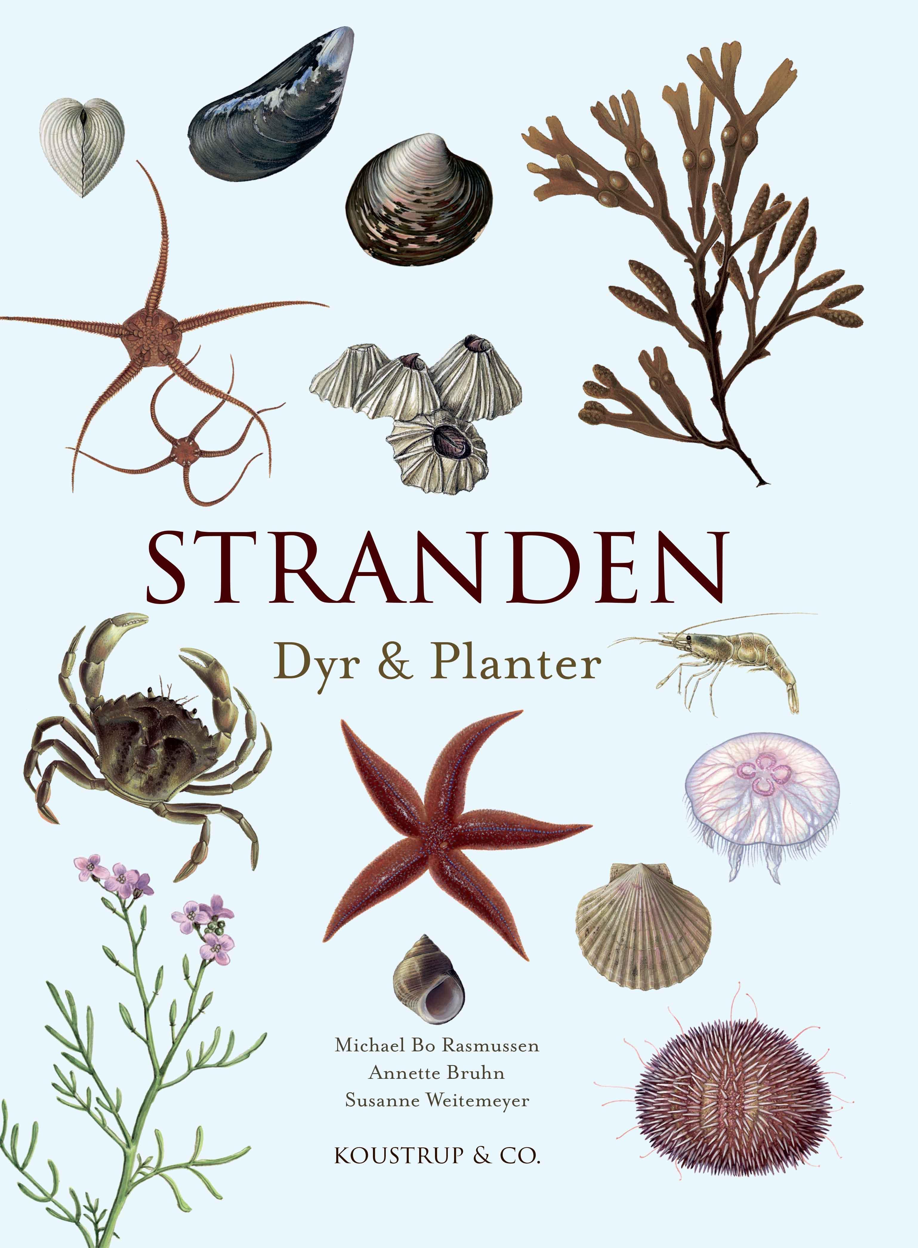 Stranden - Annette Bruhn Michael Bo Rasmussen - Bøger - KOUSTRUP & CO - 9788793159570 - April 20, 2021