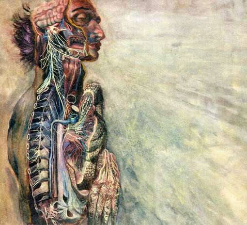 Fear & Nervous System - Fear & Nervous System - Musik - EMOTIONAL - 0044003161955 - 8/9-2012